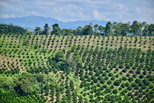 Landscape of the Quindío coffee region