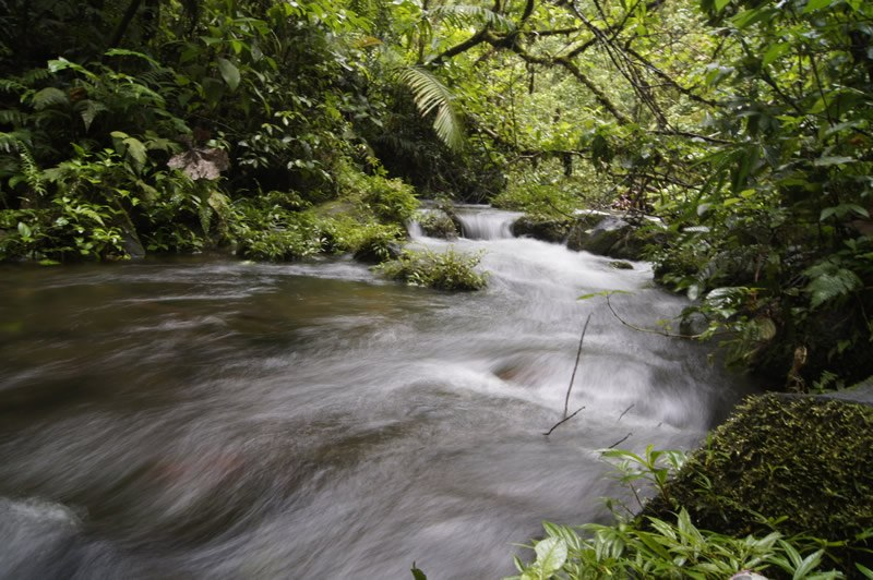 The daily period of rain in Costa Rica also produces beautiful rushing streams and dense jungles
