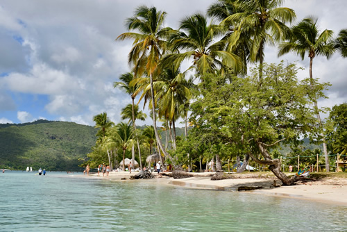 Beach of Sainte Anne, palm trees