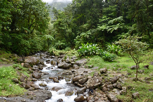 Tropical forest along 'La Trace des Jesuites' in Northern Martinique