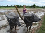 Volunteer in Cambodia with Projects Abroad