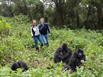 Volunteer and safari in Uganda