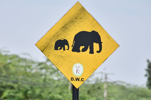 Warning sign along the road in southern Sri Lanka