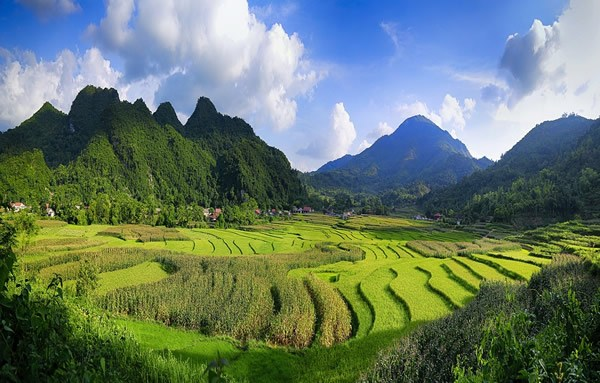 The rice fields in a valley amidst the mountains of Vietnam