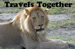 Travel Together Tours