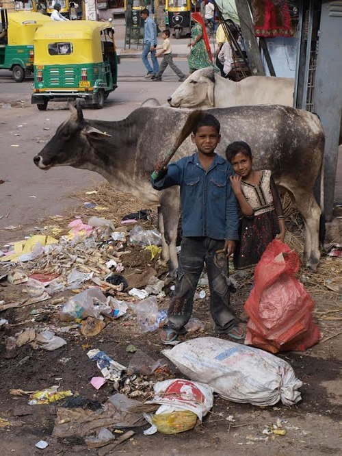 Children and Cows in Jaipur, India