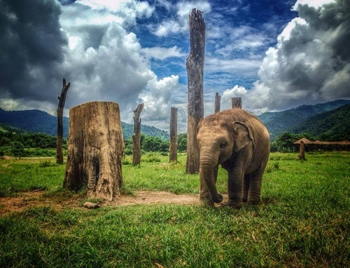 Save the Elephant at Elephant Nature Park from 'How Travel Can Change the World'