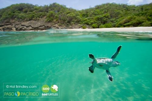 Turtle in Costa Rica from 'How Travel Can Change the World'