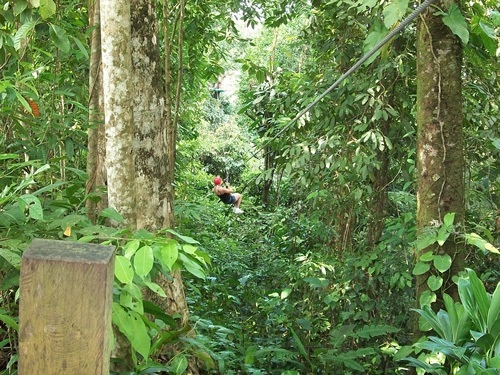 Teen ziplining in rainforest