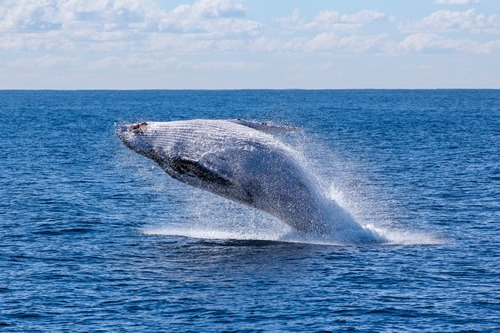 Australia and New Zealand: Best for adventure travel. Whale jumping here.
