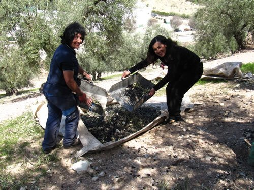 Olive Picking and Traditional Cooking in Hidden Andalucia, Spain