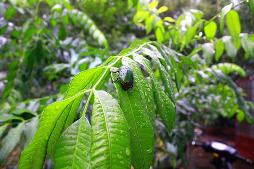 Yes, there are, in fact, bugs in Asian jungles
