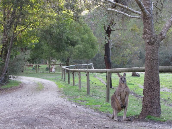 Flora and fauna and a kangaroo will greet you