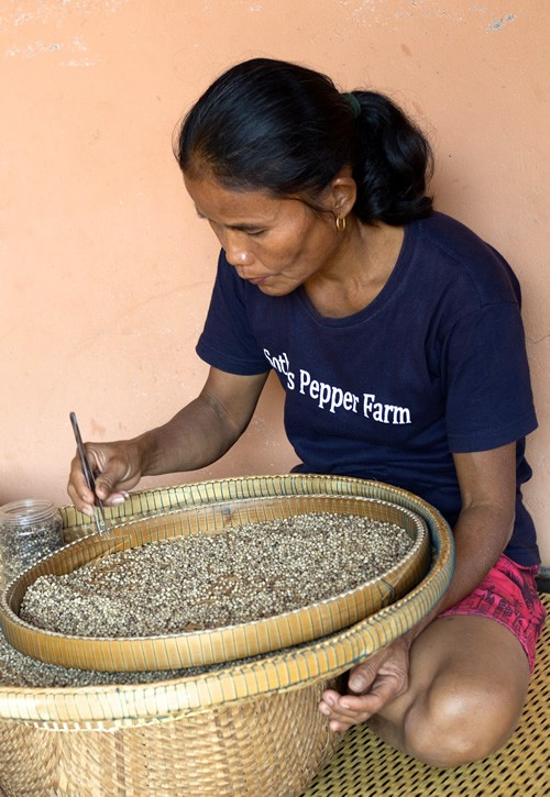 Woman selecting pepper corns at Kampot pepper farm