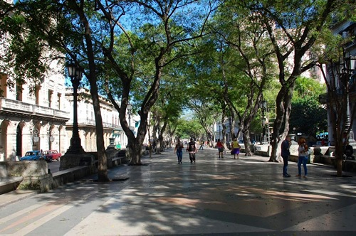 Tree-lined strees in Havana
