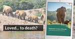 End Elephant Tourism
