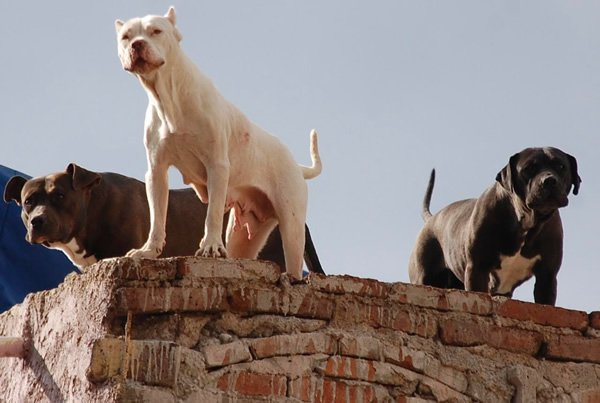 Territorial dogs on a rooftop!