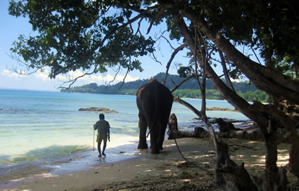 Andaman islands, India, man and elephant