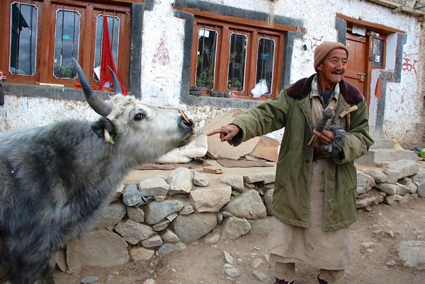 Host with yak