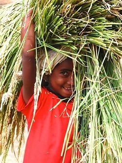 Girl carrying straw in Madagascar