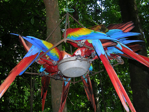 Feeding Macaws in Costa Rica