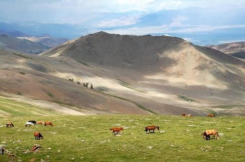 A herd of horses in Mongolia