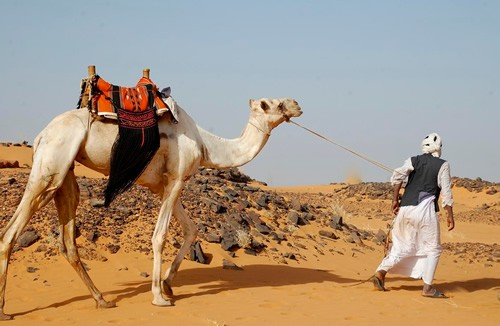 Nomad man with a camel