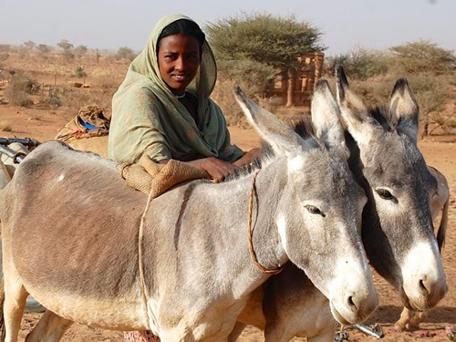 Daughter with donkeys in North Sudan