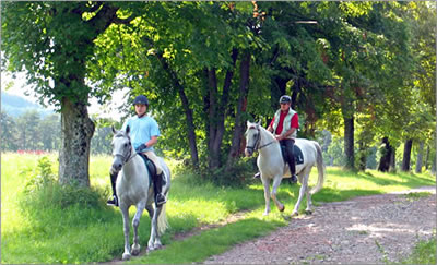 Lipica Stud Farm riding trails
