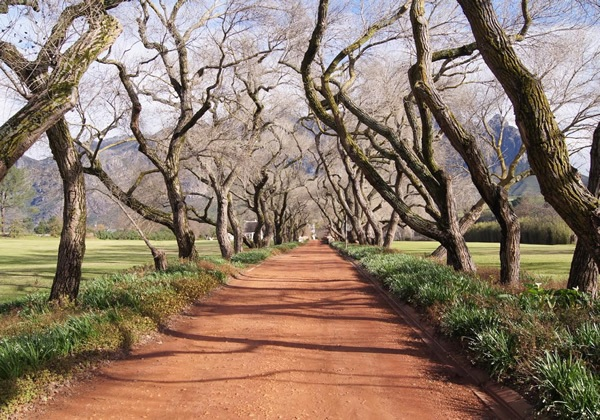 The road to a wine tasting at the L'Ormarins Estate near Franschhoek
