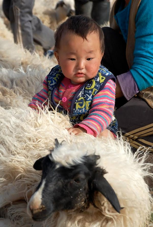 Girl in Mongolia pets a sheep