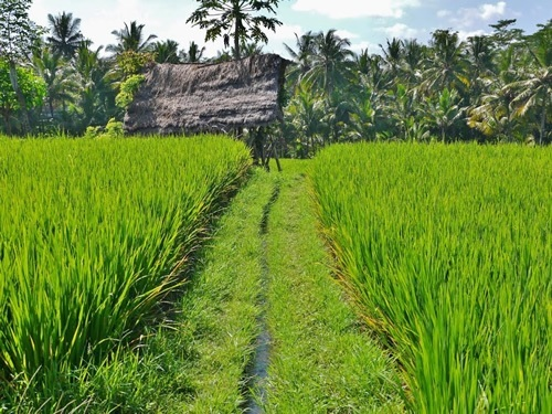 Bali: Chickens, Roosters and Rujak in Paradise