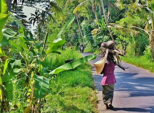 Woman carrying coconut husks