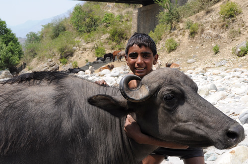 Young man with buffalo
