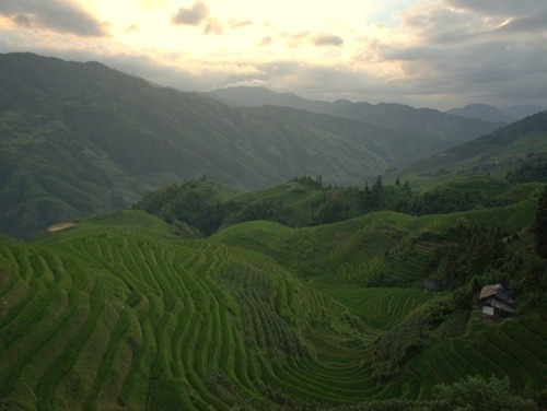 Dragon's Bone rice terraces, China