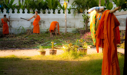 Monks working in a garden