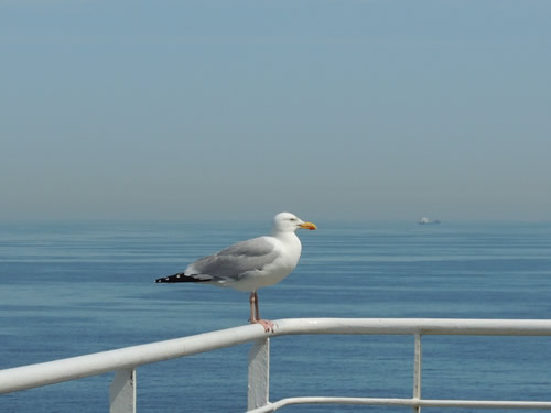 Eco travel bird on a ferry