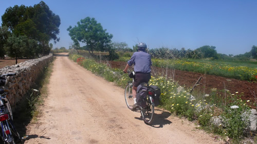 Cycling on road in olive groves in Puglia.