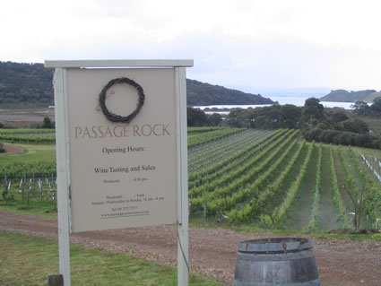 A vinyard in New Zealand