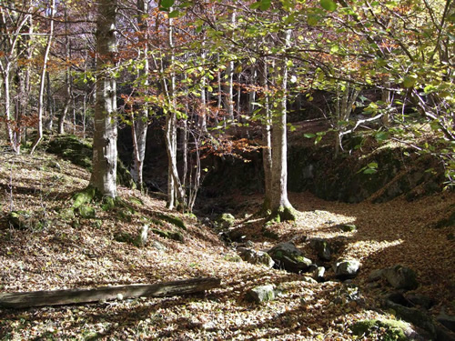 Enchanted forest in Rioja near sacred cave