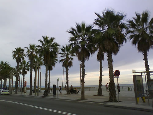 Teaching English in Barcelona amidst the palms