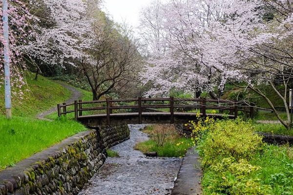 Teaching English And Living In Japan Transitions Abroad