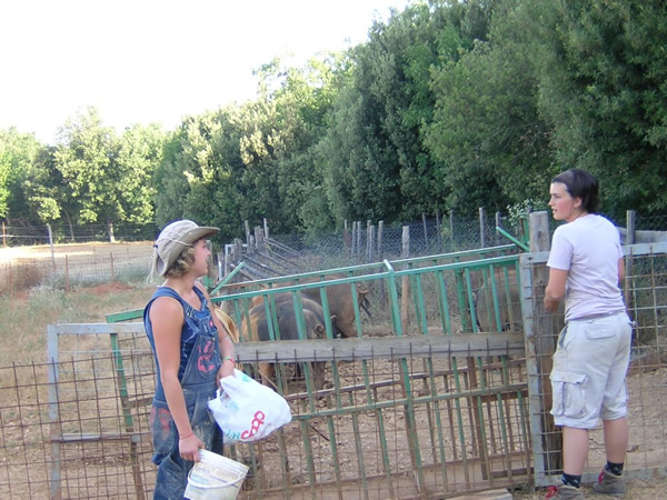 Interns it Italy on the organic farm