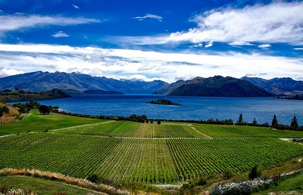 You can harvest grapes in New Zealand