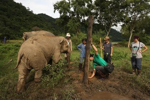 Volunteer to protect elephants from abuse