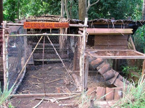 Volunteer job in chicken coop
