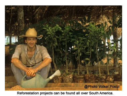 Volunteer in South America on sustainable reforestation project