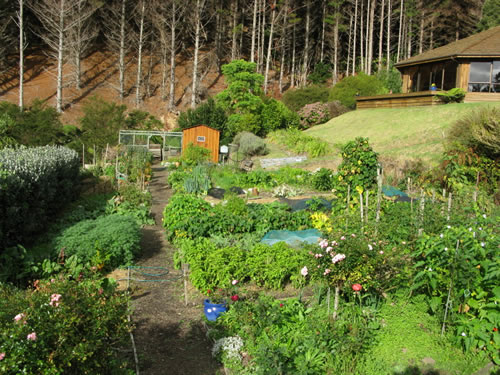 Organic garden at Mana in New Zealand