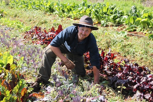 Volunteer abroad organic gardening with WWOOF International