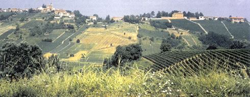 Culinary Travel in Italy in the Langhe